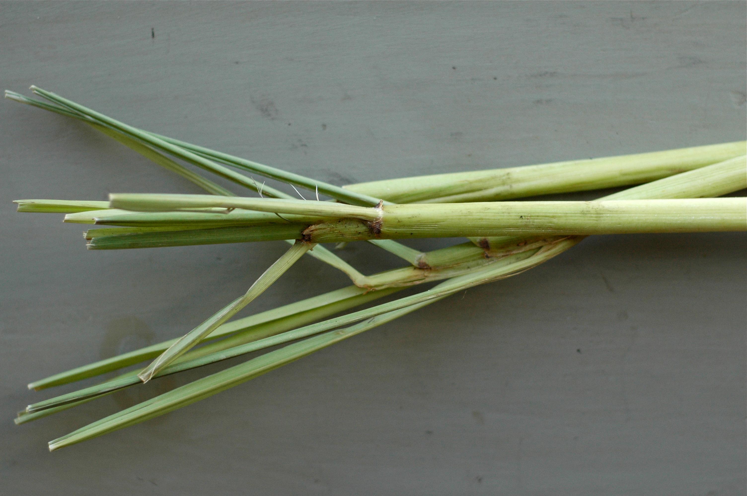 lemongrass // Delightful Crumb