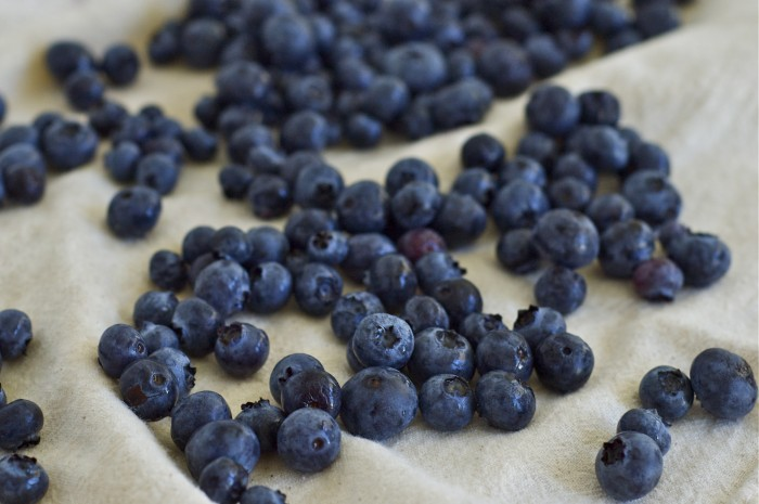 Blueberries | Delightful Crumb