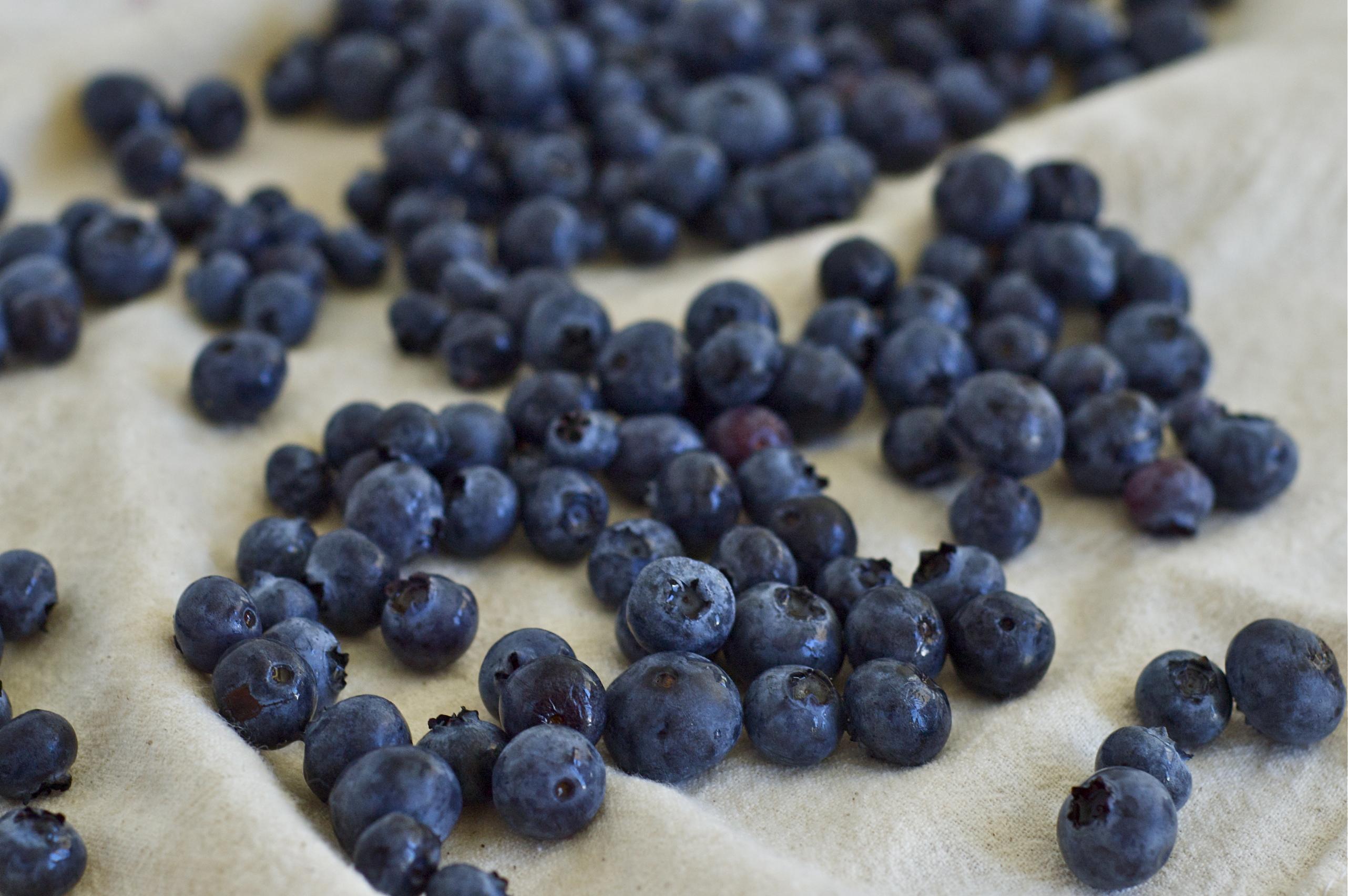 Blueberries | Delightful Crumb