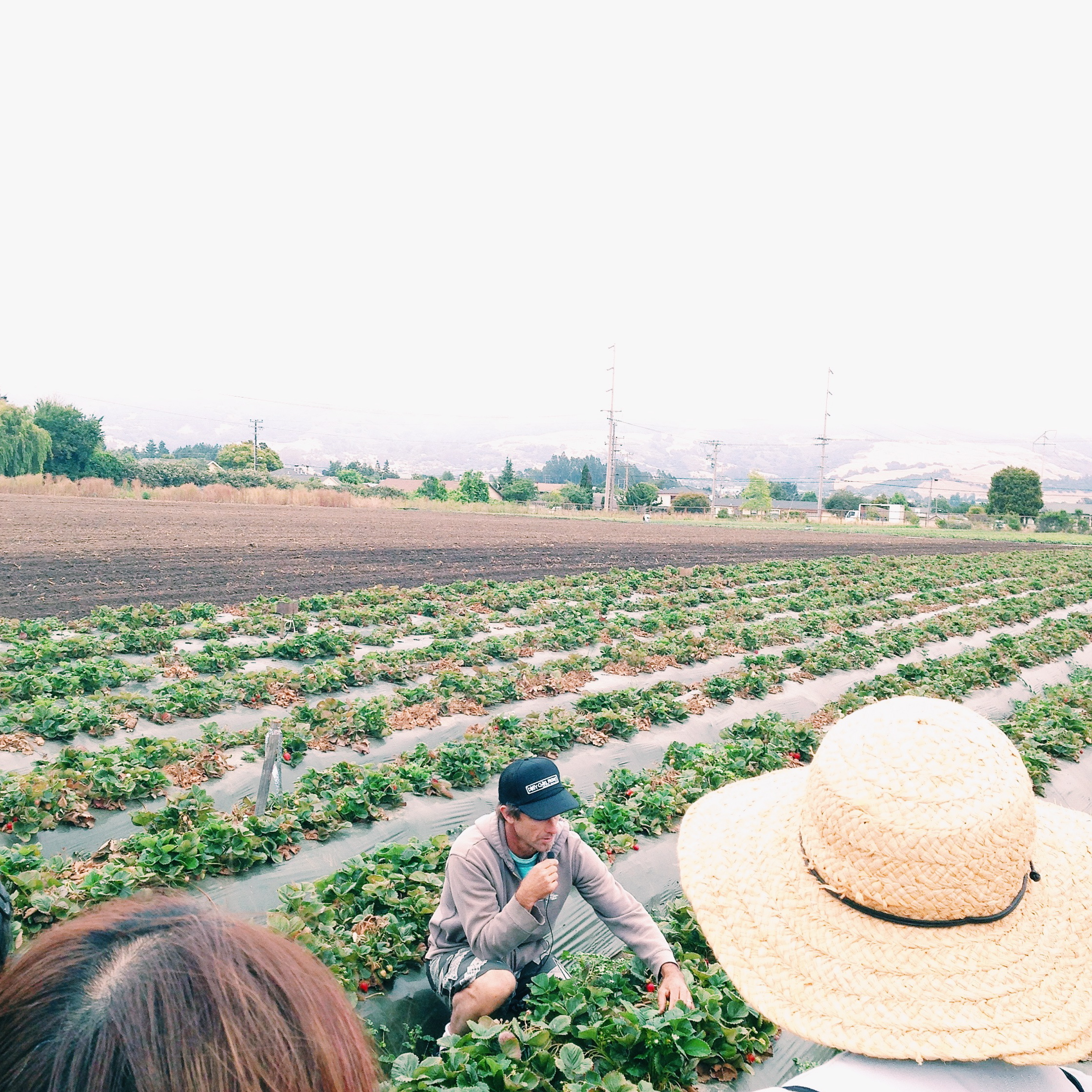 Dirty Girl Farm | Delightful Crumb