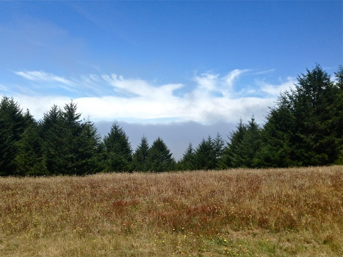 Point Reyes clouds | Delightful Crumb