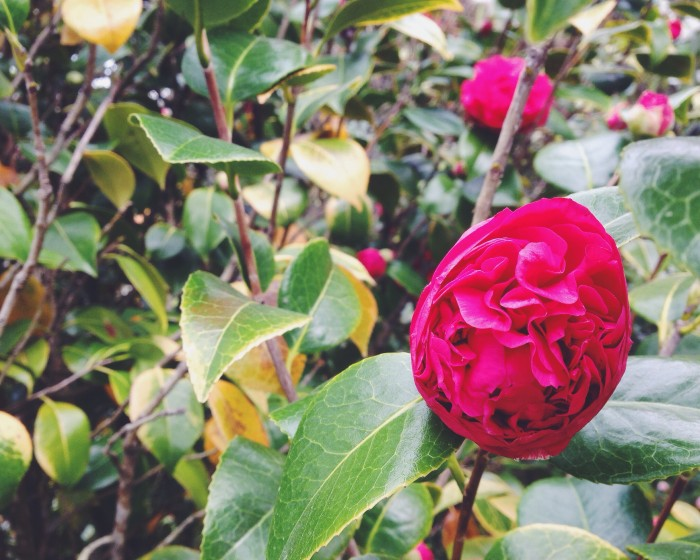 Botanical Gardens | Delightful Crumb