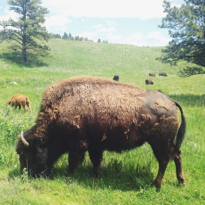 Bison | Delightful Crumb