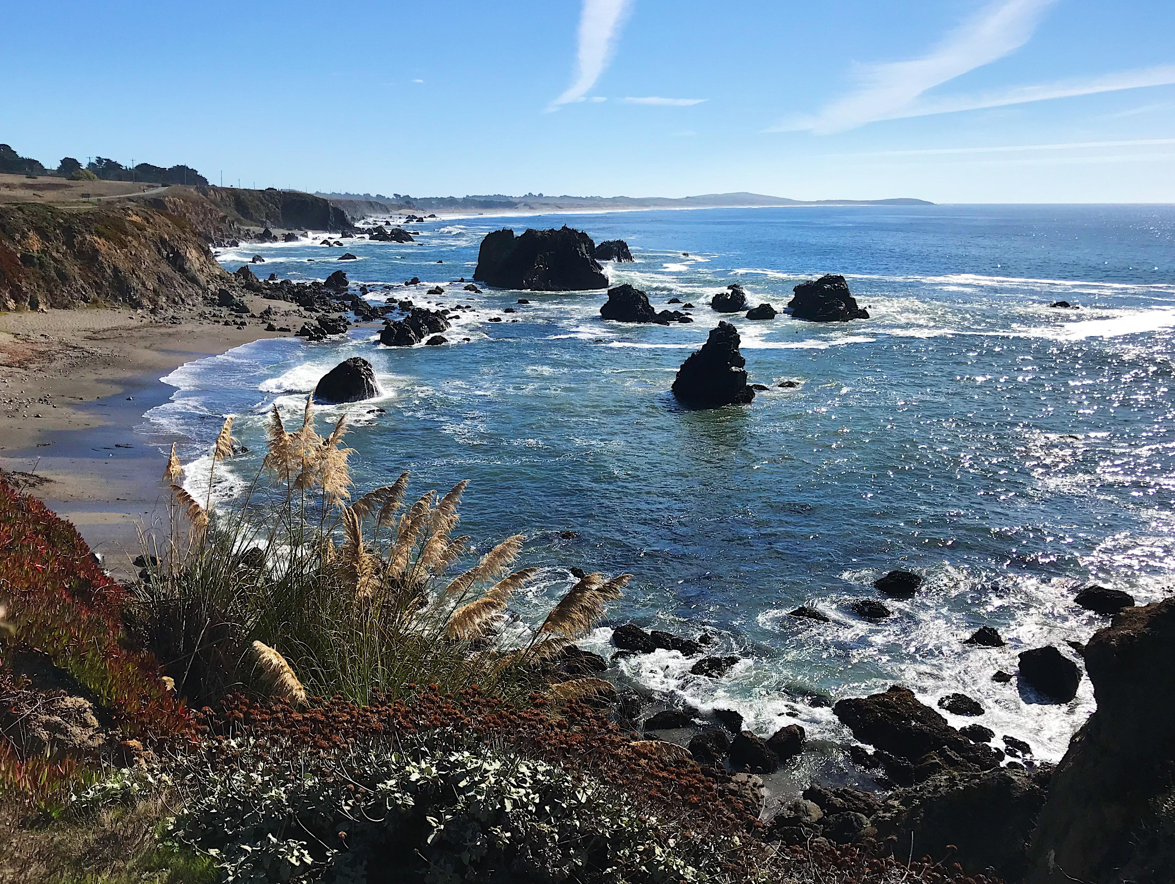 Sonoma Coast   Delightful Crumb
